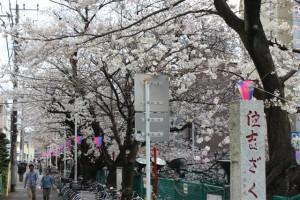 渋川沿IMG_2047