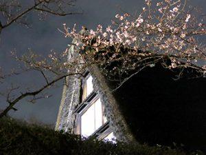 夜の民家園(桜ライトアップ)
