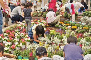 親子の花植え002
