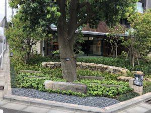 シラカシの木の周りに新しい植栽や景石を設置