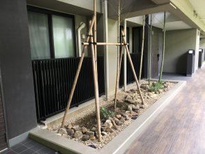 1F廊下の竹